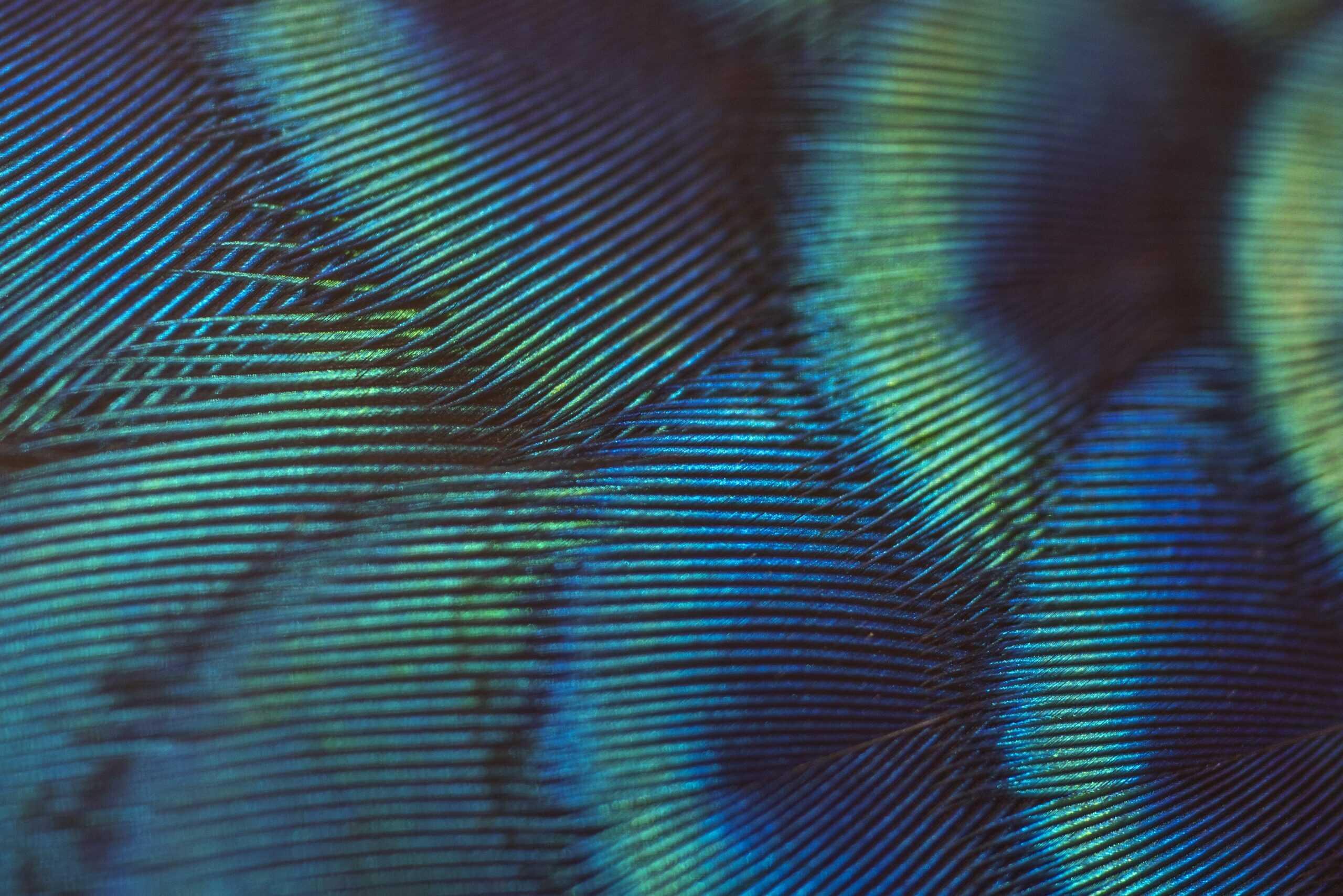 stock plumes vertes et bleues